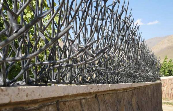 شاخ گوزنی با کیفیت بالا