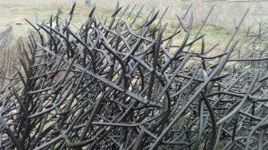 نمونه شاخ گوزنی با رنگ کوره ای
